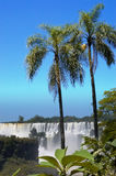Cadute 3 di Iguazzu fotografia stock libera da diritti