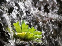 Cadute della roccia Immagini Stock