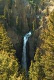 Cadute della torre del fiume Yellowstone Fotografia Stock