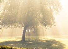 Cadute di luce solare di mattina. Fotografia Stock Libera da Diritti