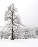 Cadute di Truemmelbach - inverno Fotografia Stock