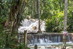 Cadute Giamaica le Antille del fiume di Dunn Immagine Stock Libera da Diritti