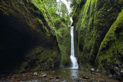Cadute più basse nella gola di Oneonta Gola del fiume Columbia Fotografia Stock Libera da Diritti