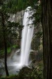 Cadute primaverili in parco nazionale di Yosemite attraverso gli alberi immagine stock libera da diritti