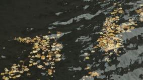 Caduto nelle foglie di autunno di giallo del fiume video d archivio