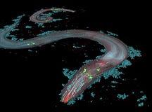 Caenorhabditis elegans στοκ εικόνες