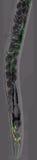 Caenorhabditis elegans Stock Photo