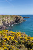 Caerfai Bay Pembrokeshire West Wales UK Royalty Free Stock Photos