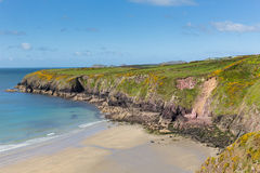 Caerfai strand och fjärd Pembrokeshire västra Wales UK Arkivfoton