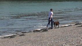 Caernarfon, Wales - April 21 2018: Mens die zijn hond op één van de heetste dagen in Wales lopen stock footage