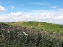 Caerphilly общее с полевыми цветками, южным уэльсом Стоковые Фотографии RF