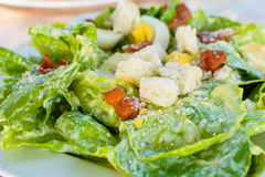 Caesar Salad Foto de Stock Royalty Free