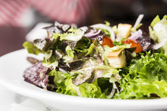 Caesar salad. Healthy eating with caesar mixed salad on white dish Stock Photography