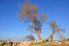 Caesarea. Lugar da fortaleza arruinada. Fotos de Stock Royalty Free