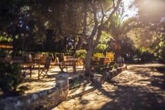 Café al aire libre con la palmera grande Fotografía de archivo