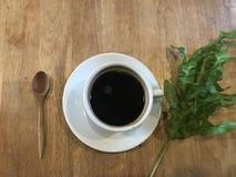 Café chaud avec la feuille verte fraîche pendant le matin Photos stock