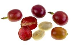 Café Cherry Fruit Anatomy imagem de stock royalty free