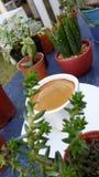 Café d'expresso dans la tasse blanche parmi le mini cactus Photos stock