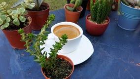 Café d'expresso dans la tasse blanche parmi le mini cactus Images libres de droits