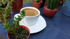 Café d'expresso dans la tasse blanche parmi le mini cactus Photos libres de droits