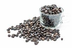Café de la semilla en el fondo blanco Imagen de archivo libre de regalías