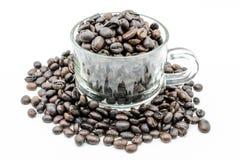 Café de la semilla en el fondo blanco Fotos de archivo libres de regalías