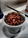 Café del germen Fotos de archivo libres de regalías