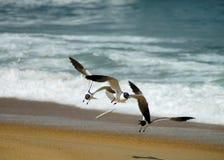Café dos peixes de voo Imagem de Stock Royalty Free