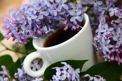 Café e lilás Fotografia de Stock