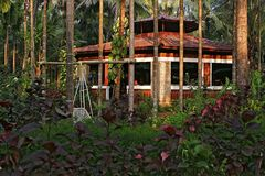 Café en la selva india Imagen de archivo