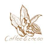 Café et cacao de logo illustration libre de droits