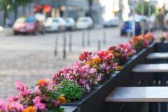 Café extérieur avec des fleurs Photographie stock libre de droits