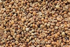Café fermentado del grano Foto de archivo