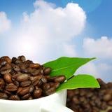 Café fresco fotografia de stock