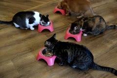 Café-Katzen - Fütterungs-Zeit 2 lizenzfreie stockbilder