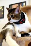 Café-Katzen - heraus überprüfend lizenzfreie stockfotografie
