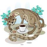 Café Kopi Luwak do almíscar Imagem de Stock Royalty Free