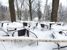 café nevado na natureza Foto de Stock Royalty Free
