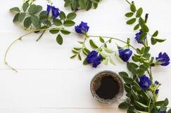 Café preto com a flora local azul da ervilha de borboleta da flor de Ásia imagens de stock royalty free