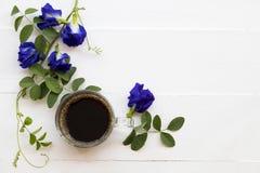 Café preto com a flora local azul da ervilha de borboleta da flor de Ásia imagem de stock royalty free