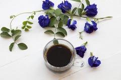 Café preto com a flora local azul da ervilha de borboleta da flor de Ásia fotos de stock royalty free