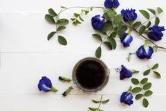 Café preto com a flora local azul da ervilha de borboleta da flor de Ásia foto de stock