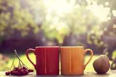 Café-rotura-en--jardín Fotografía de archivo