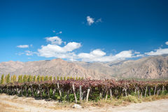 Cafayate, Argentina Royalty Free Stock Images