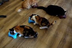 Cafe Cats - Feeding Time 1 Royalty Free Stock Images