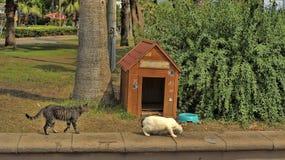 Cafe for feeding stray cats Royalty Free Stock Photo