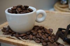 Caffè arrostito Immagine Stock