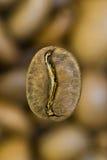 Caffè brasiliano Immagine Stock Libera da Diritti
