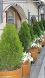 Caffè del terrazzo di estate con i fiori Fotografie Stock Libere da Diritti