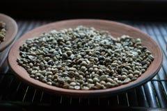 Caffè di Luwak sul piatto dell'argilla Immagine Stock Libera da Diritti